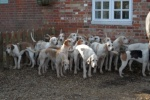 New Forest Hounds meet at Turfcutters Arms, this photo from 2013
