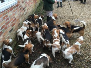 Beagles meet at the Turfcutters Arms East Boldre